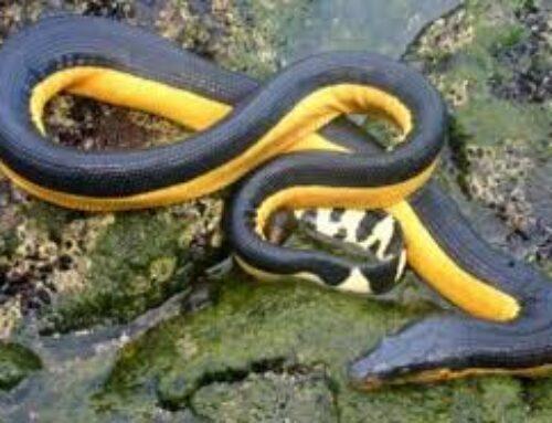 شركة مكافحة الثعابين في دبي |0503284116 |مبيدات معتمدة