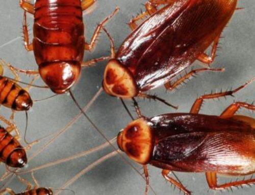 شركة مكافحة الصراصير في الشارقة |0503284116| رش حشرات