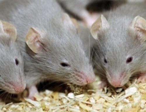 شركة مكافحة الفئران ام القيوين |0503284116| رش المبيدات