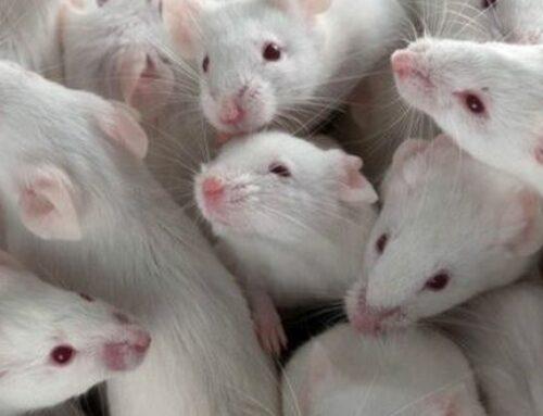 شركة مكافحة الفئران في عجمان |0503284116| اقوي مبيدات